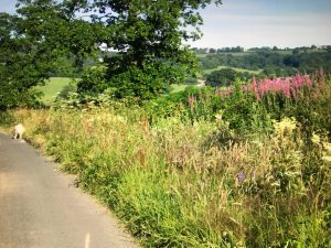 Flower filled lanes in the Blackdown Hills, an AONB, surrounding Twistgates Farm Cottages in Devon